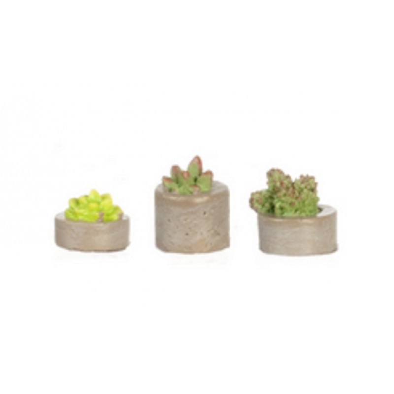 Dolls House 3 Succulents in Plant Pots Miniature Home or Garden Accessory