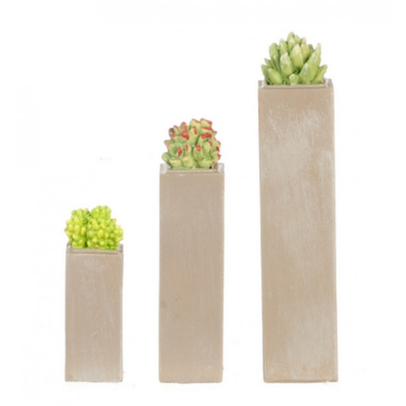 Dolls House 3 Succulents in Tall Planters Miniature Home or Garden Accessory