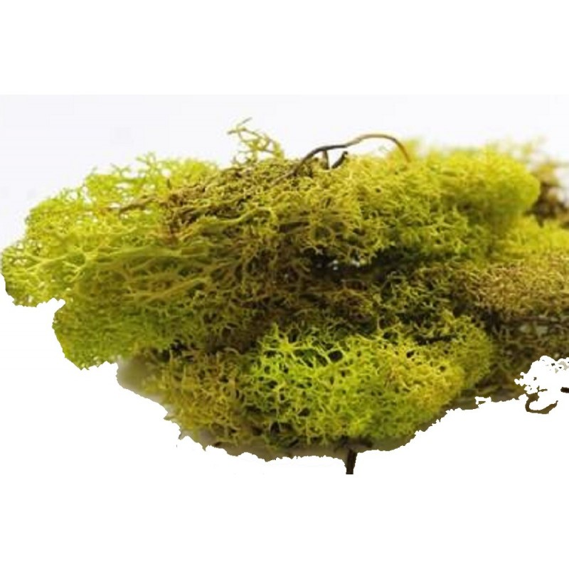 Dolls House Light Green Lichen 12s Garden Scenic Accessory