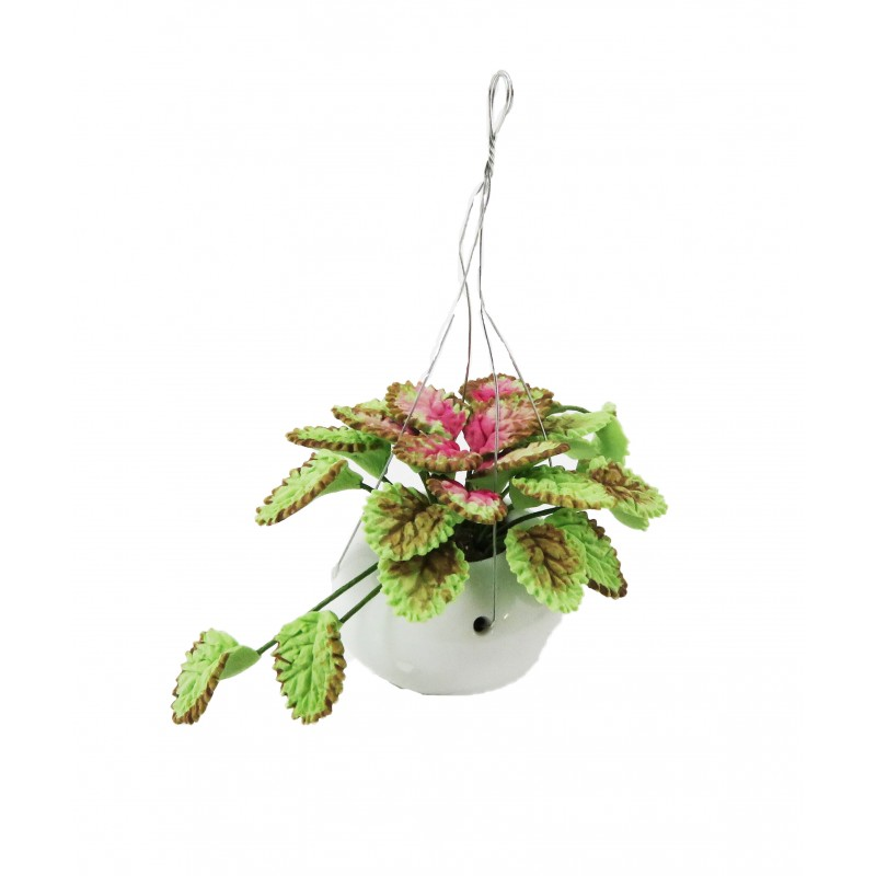 Dolls House Caladium Plant in White Hanging Basket Home or Garden Accessory