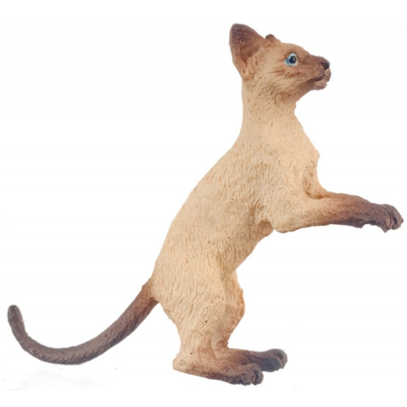 Dolls House Siamese Cat Rising Up After Something 1 :12 Scale Miniature Pet