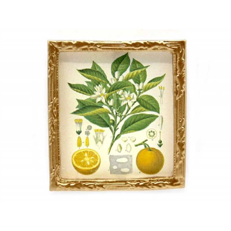 Dolls House Botanical Orange Picture Painting Gold Frame Miniature Accessory