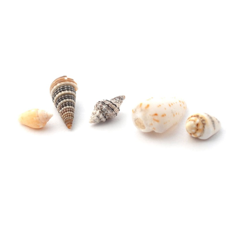 Dolls House 5 Sea Shells Ornaments Miniature Beach Bathroom Garden Accessory