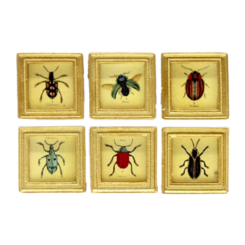 Dolls House 6 Beetle Pictures Paintings in Square Gold Frame Miniature Accessory