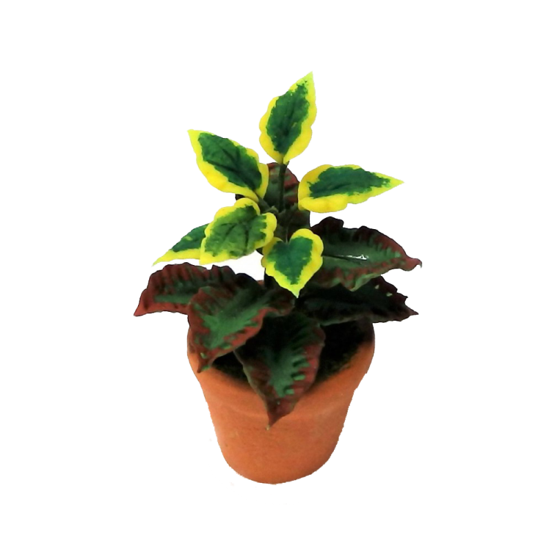 Dolls House Plant in Terracotta Pot Miniature Home or Garden Accessory Type A